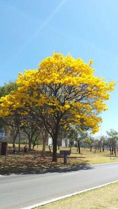 Seca em Brasília ♡ So Beautiful