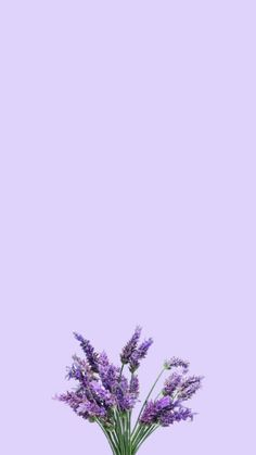 Cute Wallpapers, Wallpaper Backgrounds, Iphone Wallpaper, Eid Stickers, Lilac, Lavender, Instagram Background, Sunflower Wallpaper, Anime Girl Drawings
