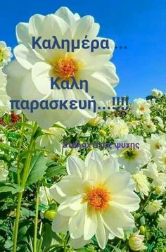 Good Morning Messages Friends, Entertaining, Flowers, Royal Icing Flowers, Flower, Funny, Florals, Floral, Blossoms
