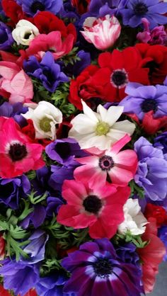 Anemones in full bloom from local farmer.