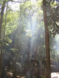 Smoke in the trees by islandmommacanarias, via Flickr