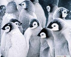 #pinguins