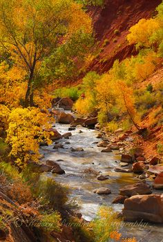 The Virgin River in Zion National Park, Utah in all it's fall splendor. Beautiful, golden cottonwoods stand along the shore as the river flows by. Fall Pictures, Nature Pictures, Beautiful World, Beautiful Places, Landscape Photography, Nature Photography, Autumn Scenes, Autumn Painting, All Nature
