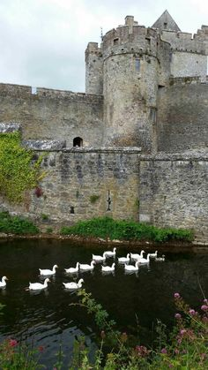 Cahir Castle (County Tipperary) - All You Need to Know BEFORE You Go - Updated 2020 (County Tipperary, Ireland) - Tripadvisor Beautiful Castles, Beautiful Places, Castles In Ireland, Ireland Landscape, Republic Of Ireland, Ireland Travel, Ireland Vacation, Medieval Castle, Landscape Designs