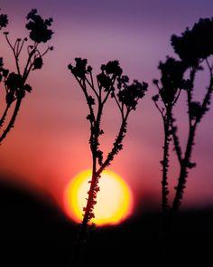 Winter flowers (14/366)  #rebels_united #rebelsunited_nature #rsa_nature #jj_nature #rsa #eyeem #igers #nature #landscape #bestofbaltics #estonia #instagram #fiftyshades_of_nature #ig_captures #ig_myshot #nature_br by mt_captures