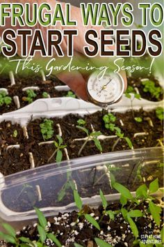 Are you a beginner gardener? Learn frugal ways to start your seeds this gardening season with items Organic Vegetables, Growing Vegetables, Gardening Vegetables, Organic Fruit, Growing Herbs, Pune, Garden Pests, Garden Tools, Garden Ideas