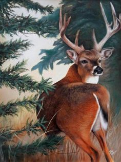 The Deer ~ Nicole Laurence