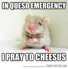 Mouse with a strong faith in Cheesus - ROTFL! For the best funny animal jokes with pics visit www. Funny Animal Jokes, Funny Animals, Funny Jokes, Cute Animals, Lame Jokes, Animal Humor, Hamsters, Rodents, Animal Pictures