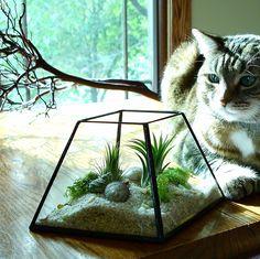 Air Plant Terrarium Glass Planter DIY Kit by JechoryGlassDesigns