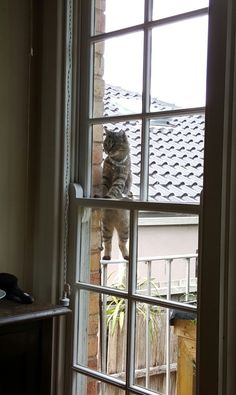 awwww! Cute! — I looked up and saw this… (Source:...