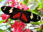 Butterflies Live from May 25th - Oct. 14th 202 @ Lewis Ginter Botanical Garden