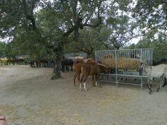 Alter Stud Farm, Alter do Chao   #Marvao #Alentejo #Portugal #Hotel #travel #BoutiqueHotelPoejo