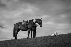 Dog Photography, Switzerland, Horses, Dogs, Animals, Wedding Photography, Animaux, Doggies, Horse