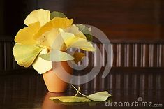 Photo about Autumn colors - leaves of Ginkgo biloba, ginkgo, maidenhair tree. Image of ginkgo, medicine, natural - 130117130