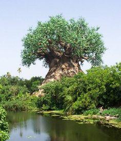 Heel bijzondere bomen in Zuid Afrika en kunstenaar onbekend!  Zuid Afrika is een land dat erg tot mijn verbeelding spreekt. Ze zijn er natuurlijk bekend om het prachtige Krugerpark en alle wilde dieren. Maar er staan ook hele bijzondere bomen.