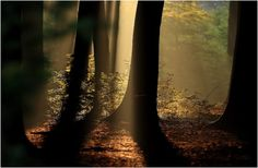 Sunbeams in the Forest - Pixdaus