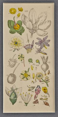 Grammar of Botany, Illustrative of Artificial as well as Natural Classification, with an Explanation of Jussieu's System. Bt Sir James Edward Smith, M.D. F.R.S.