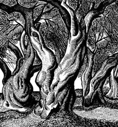 ''Olive Trees'' by Tassos - 1965 Cartoon Drawings, Drawing Sketches, Forest Coloring Pages, Olives Image, Gravure Photo, Greek Paintings, Mediterranean Art, Linoprint, Scratchboard