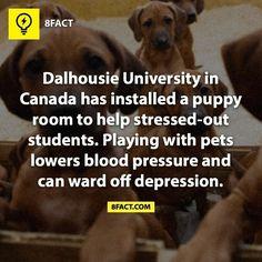 8fact (They do this during finals at several colleges here in California. And they just started taking therapy dogs to the San Francisco airport to help calm people before flying out)