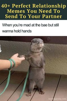 Here are some of the funniest, most accurate memes you will want to share with your significant other ASAP. Witty Jokes, Funny Corny Jokes, Punny Puns, Short Jokes Funny, Funny Disney Jokes, Funny Jokes For Kids, Crazy Funny Memes, Sarcastic Humor, Really Funny Memes