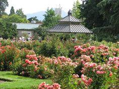Owen Memorial Rose Garden Eugene Oregon Attractions Homes Rentals