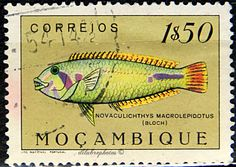 Mozambique.  FISH IN NATURAL COLORS.  RAINBOW WRASSE. Scott 340 A22. Issued 1951, Photo & Litho., Uwrmk., Perf. 14 x 14 1/2, 1.50. /ldb.