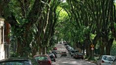 under the arched canopy of Tipuana trees along Porto Alegre's Rua Gonçalo de Carvalho can be found one of the most wondrous and unique urban streets in the world.