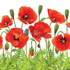 ZNU Removable Beautiful Poppies Flower Wall Decals Stickers Home Rooms Bedroom Living Room Kids Room Nursery Peel and Stick Wall Decor Wall Mural Wallpapers * Check out this great image : home diy wall Removable Wall Stickers, Wall Decor Stickers, Wall Decals, Mural Wall, Room Stickers, Wall Art, Large Flowers, Red Flowers, Spring Flowers
