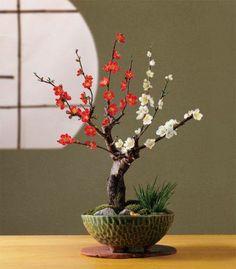 www.bonsaitreecarehub.com - a great resource for all things #bonsai