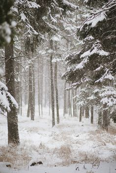 Presque Isle Park in the winter, Marquette, Michigan's Upper Peninsula by linablair, via Flickr #VSCO