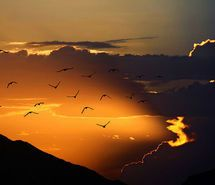 Inspiring picture sunny, birds, clouds, cute. Resolution: 500x334 px. Find the picture to your taste!
