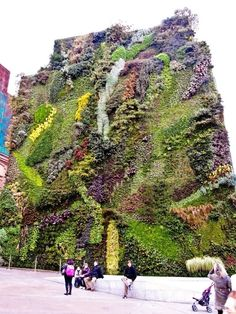 39 Insanely Cool Vertical Gardens 39 Insanely Cool Vertical Gardens Madrid Caixa Forum This Patrick Blanc-designed vertical garden on an exterior wall of a former power station features plants and 250 different species. Madrid, Garden Trellis, Garden Plants, Fruit Garden, House Plants, Vertical Vegetable Gardens, Vegetable Gardening, Organic Gardening, Container Gardening