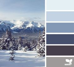 color majesty