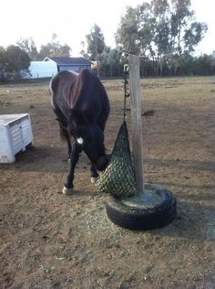 Cheap, movable hay net hanger.