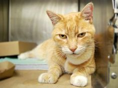 *** STILL ALIVE 12/14/16 *** RETURNED FROM ADOPTION FOR ALLERGIES *** 12 YEARS OLD, NEUTERED,