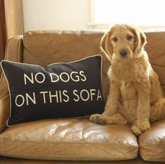 No Dogs On This Sofa Cushion