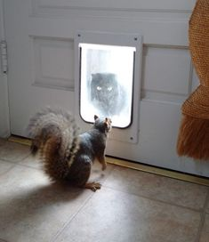 Squirrels, squirrels everywhere! Here are the winners of our annual Squirrel Week photo contest.
