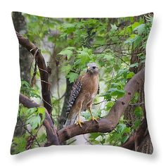 """Hawk Throw Pillow 14"""" x 14"""" $25 Click to purchase: http://instaprints.com/products/hawk-patrol-marcela-martinez-throw-pillow-14-14.html"""