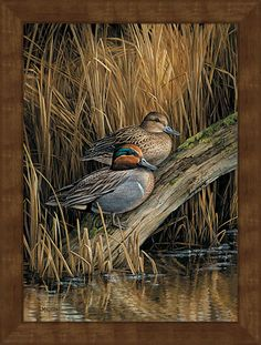 Backwaters--Green-Winged Teal GNA Premium Framed Print | Wild Wings