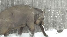 Los zoo son sitios tristes de por sí. Aunque en nuestra infancia nos hiciera gracia ver a animales enjaulados y fuera de su hábitat natural pero al crecer nos damos cuenta de que son prisiones para las pobres criaturas. Pero, incluso en el infierno, ¡hay días hermosos como este! ¡Mira y sonreirás!  El