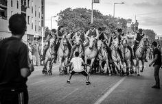 Camargue horses running the bulls in Arles