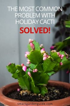 If your Holiday cactus is dropping leaves, you are not alone. This is one of the most common problems, but can be easily prevented with just a few simple care tips. Indoor Flowering Plants, Blooming Plants, Cactus Leaves, Cactus Plants, Christmas Cactus Care, How To Grow Cactus, Cactus Types, Smart Garden, House Plant Care
