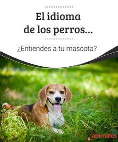 El idioma de los perros… ¿Entiendes a tu mascota?  ¿Sientes que tu mascota y tu tienen una mala comunicación?. Te damos unos consejos para que puedas entender el idioma de los perros. #idioma #perro #consejos #enterder