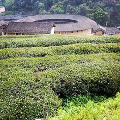 China Toulou Houses & Tea tree hills