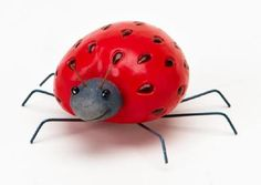 Strawberry Ladybug