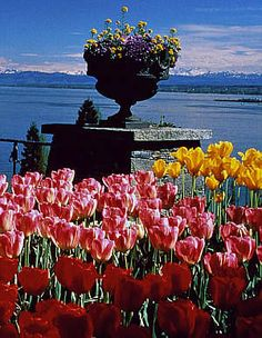 Mainau,the isle of flowers, Germany