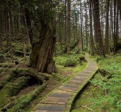 Photo by @Jeffmauritzen. Path through the temperate forest in SGang Gwaay, Haida…