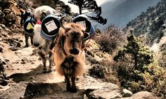 Mount Everest: the go-slow guide to base camp – with a fast ride home