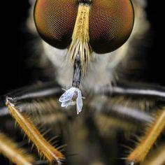 Donald Jusa (Insectos)
