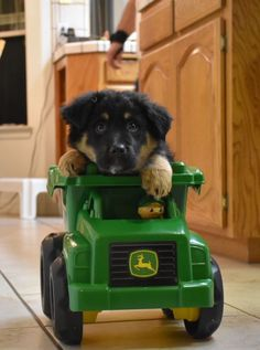 German Shepherd puppy | John deer dog | cutie pie #germanshepherd